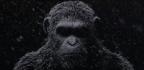 La Planète des Singes 3 : Un premier teaser